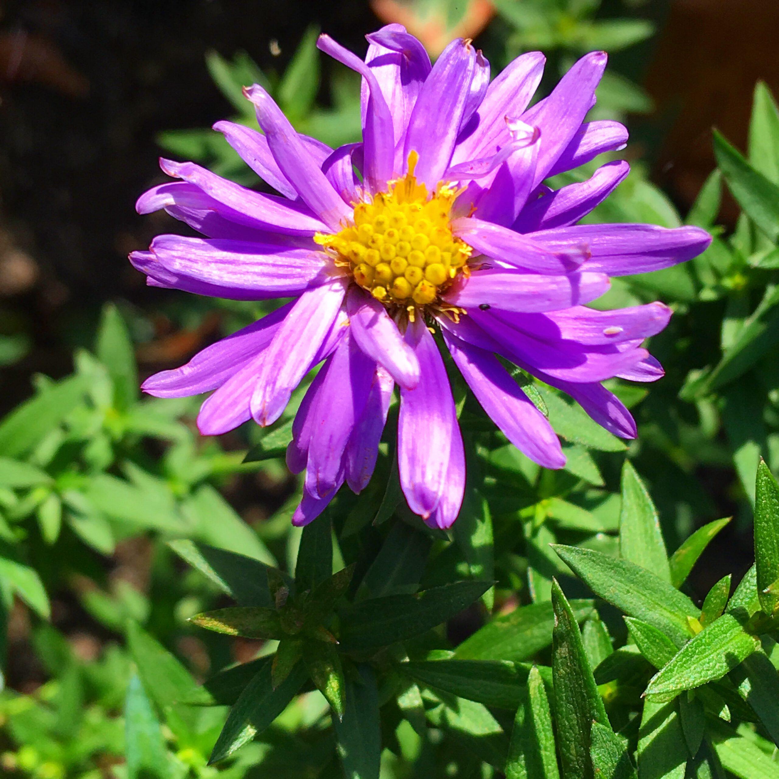 Vaste planten voor in de volle zon