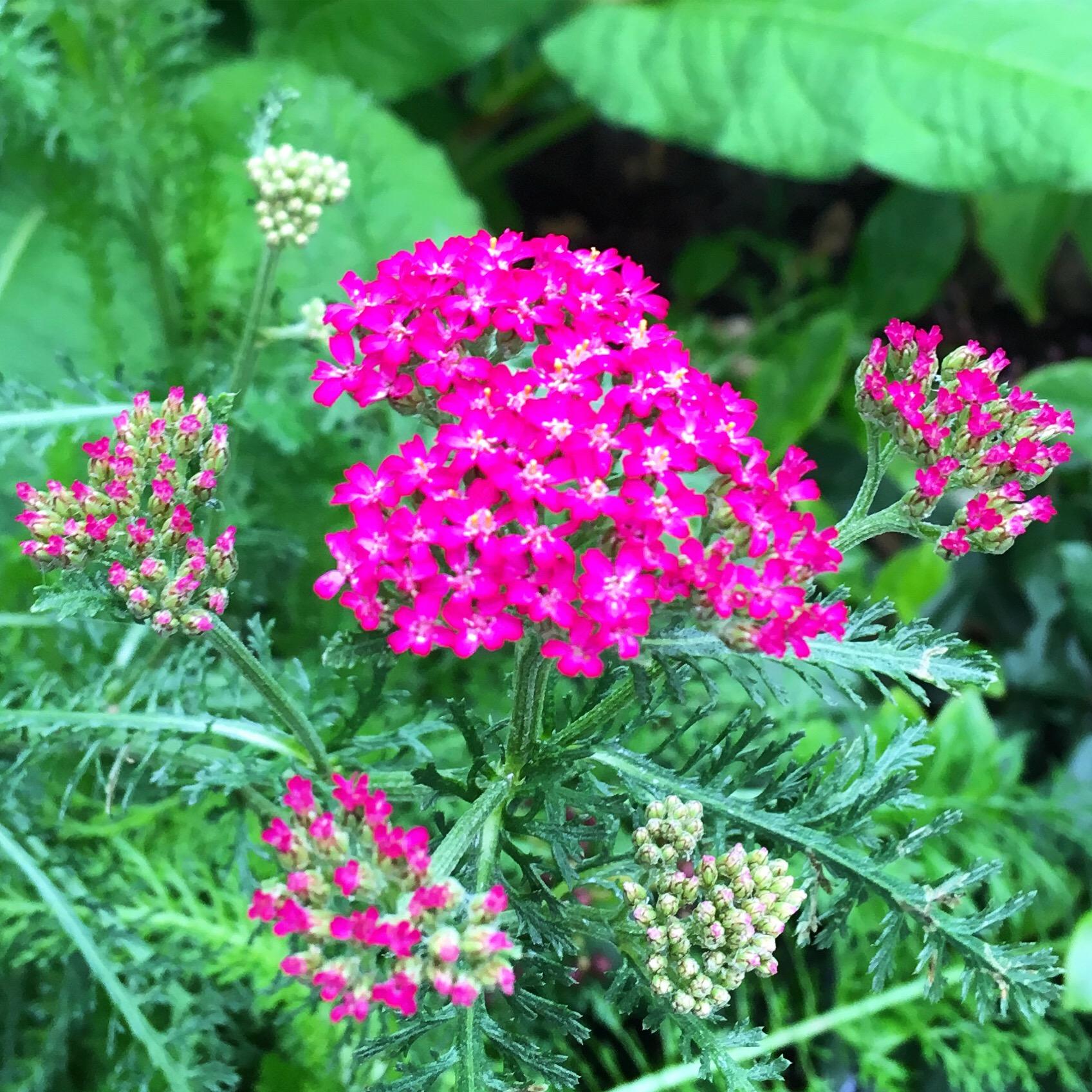 Onderhoudsvriendelijke planten