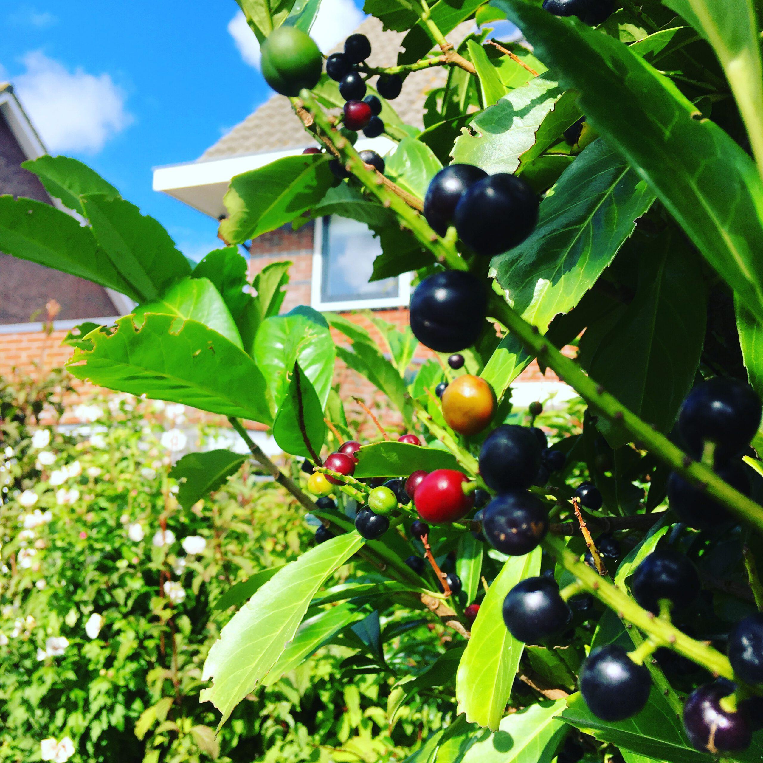 vier seizoenen-planten