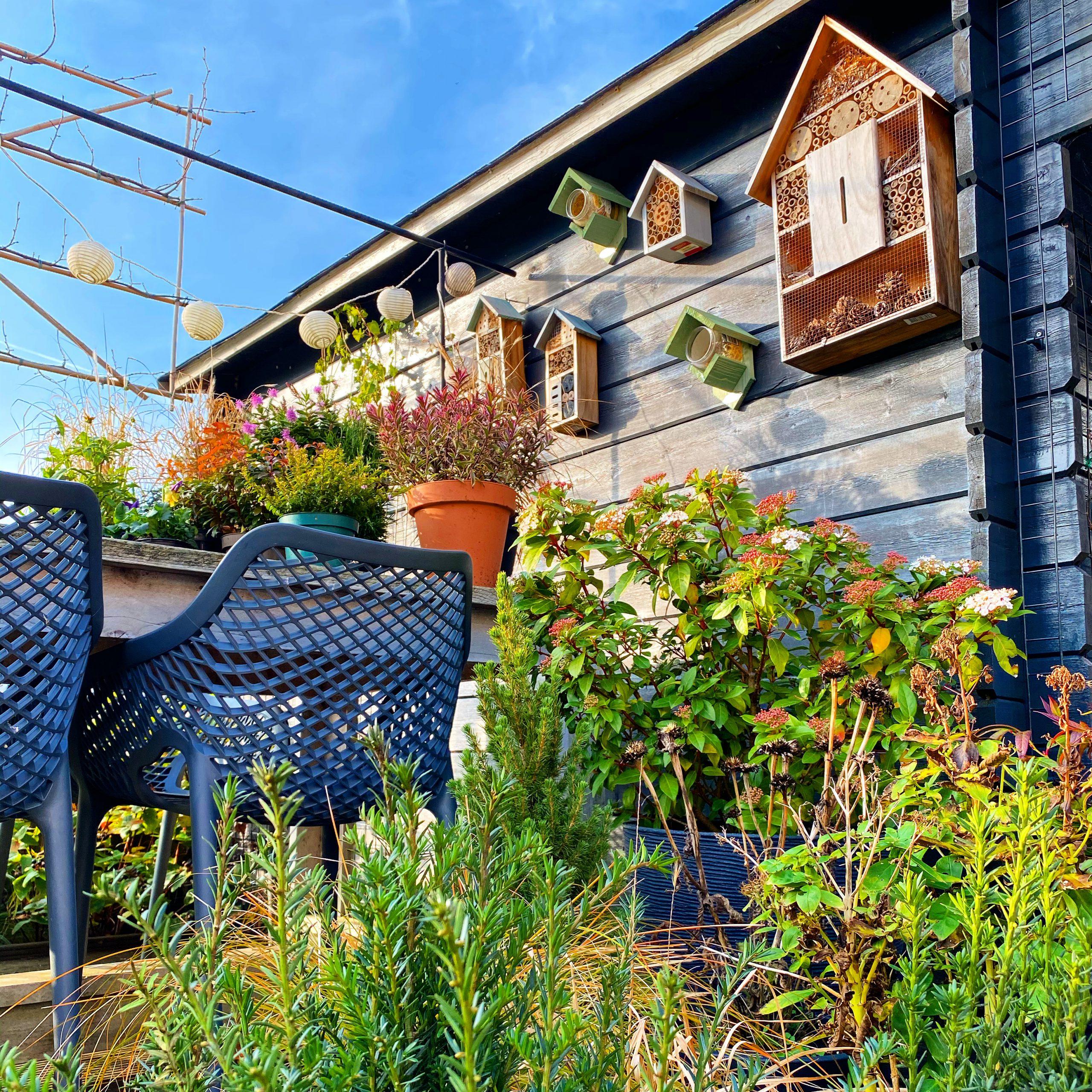 Breng sfeer in de tuin met bladplanten