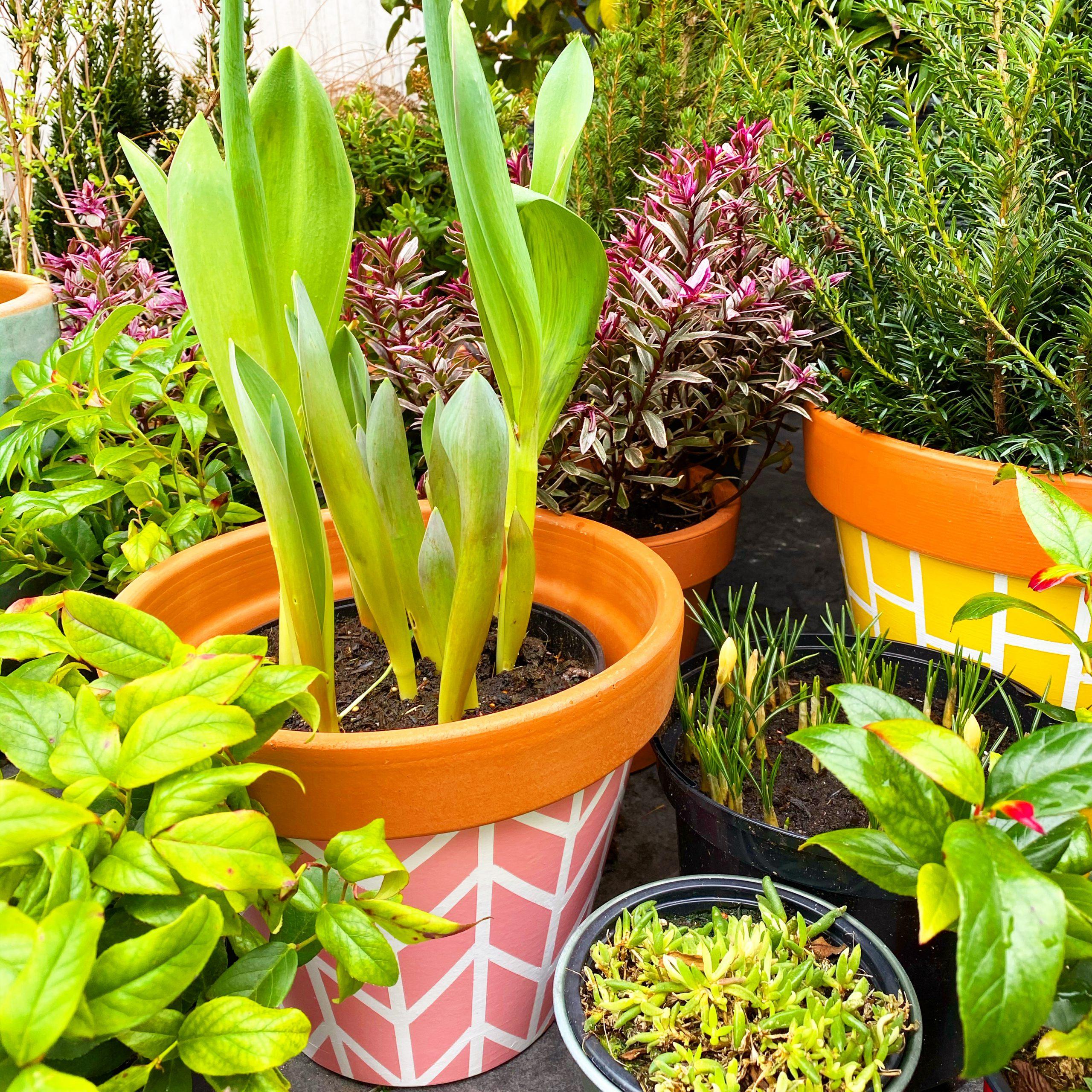 11x tips voor tuinieren met een klein budget